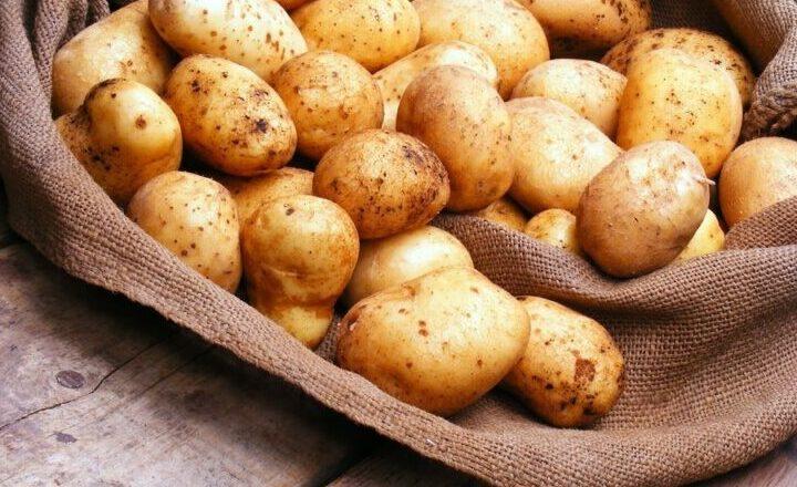 Когда сажать картошку в 2021 году по лунному календарю