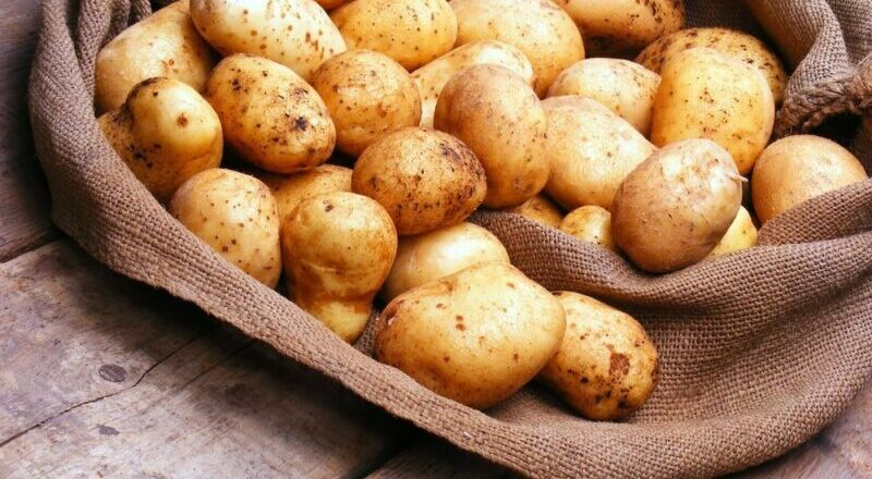 Когда сажать картошку в 2020 году по лунному календарю