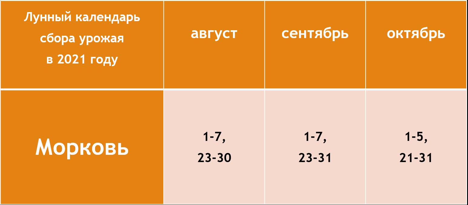 Благоприятные дни для уборки моркови с грядки по лунному календарю в 2021 году